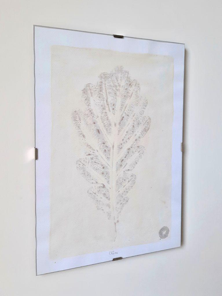 tableau herbier chêne 21x30cm