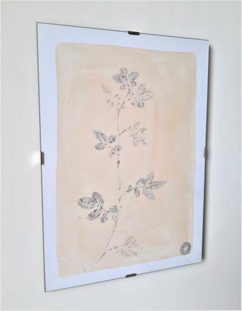 tableau herbier églantier 21x30cm