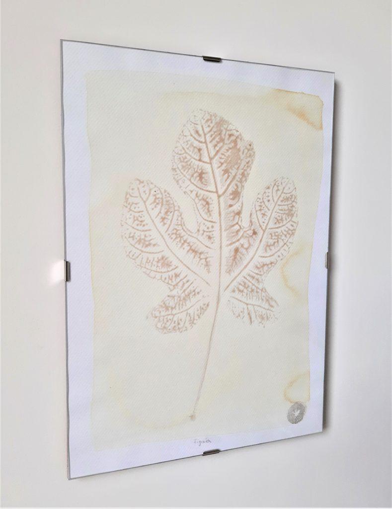 tableau herbier figuier 21x30cm
