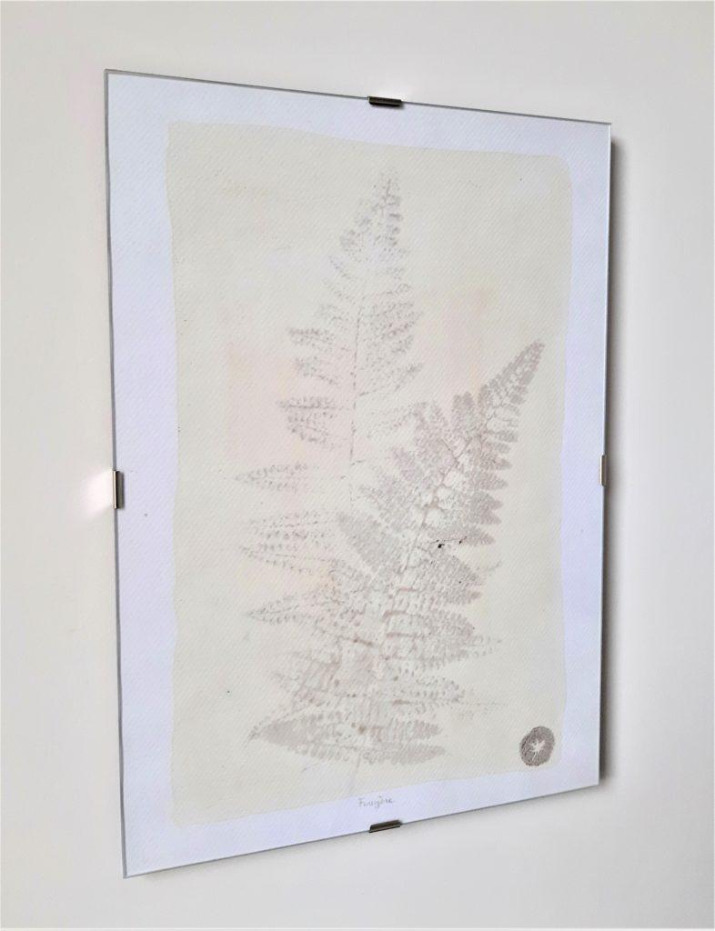 tableau herbier fougère 21x30cm