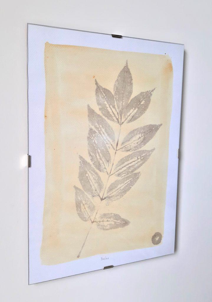 tableau herbier frêne 21x30cm