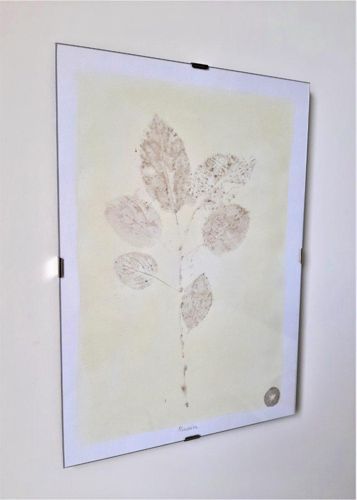 tableau herbier pommier 21x30cm